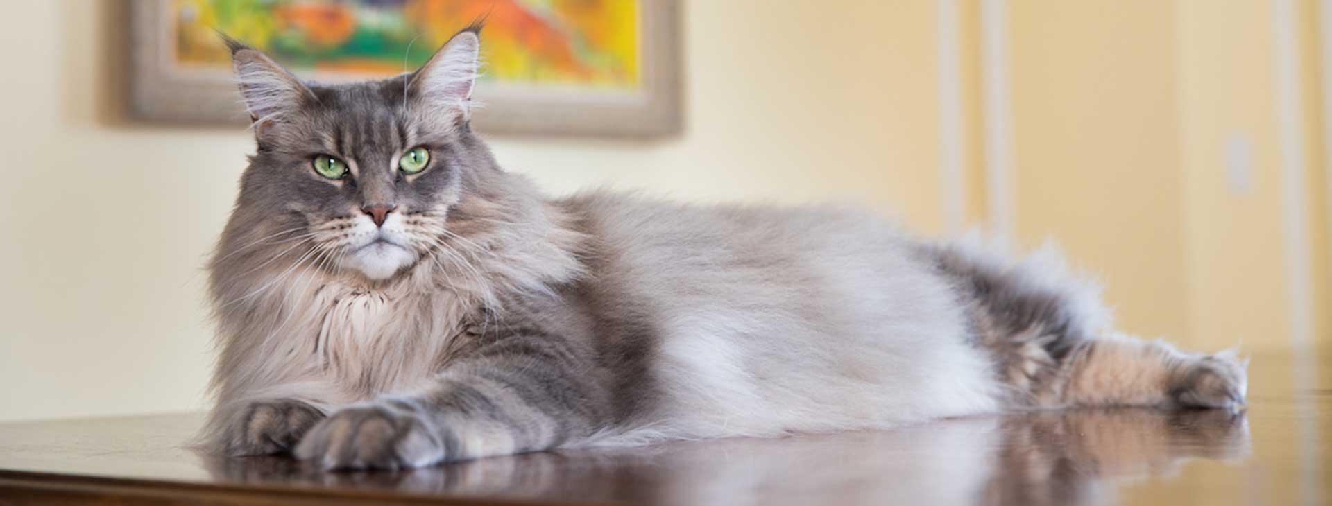 petsitcats_new_gd